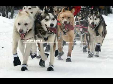 Купить обувь для собак neopaws в европе - YouTube