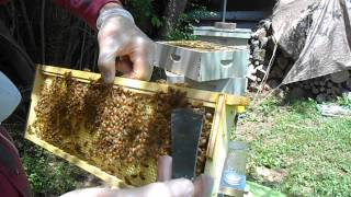 Medium Hive Body - Bottom Super
