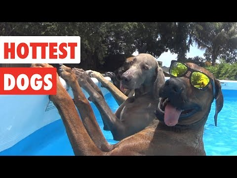 Hottest Dogs | Funny Dog Video Compilation 2017
