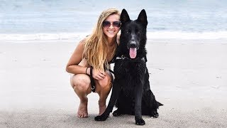 Most Amazing Facts about German Shepherds