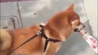 Dancing Doge. Wow.