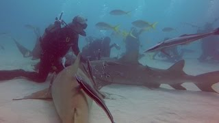 Incredible Moment Diver Gives Shark A Massage
