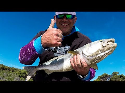 SALMON TAILOR WINTER BEACH FISHING Western Australia