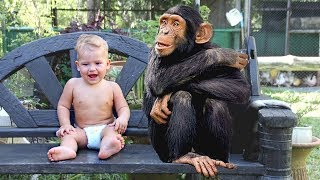 Funny Babies and Monkey Moments Compilation