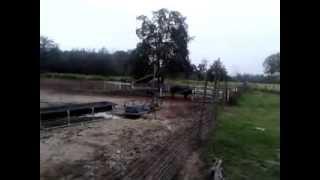 Cedar Creek, Texas (Just arrived on the pig farm)