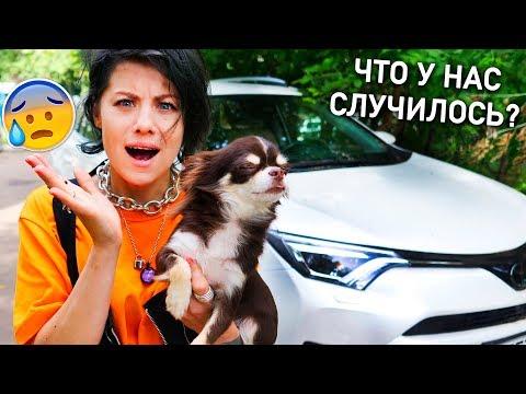 НОВАЯ МАШИНА! МЫ ПЕРЕЕХАЛИ! ПОЧЕМУ МЫ С ЮМИ УЕХАЛИ ИЗ ДОМА? С КЕМ ПИТОМЦЫ, ОТКУДА У НАС Toyota RAV4?