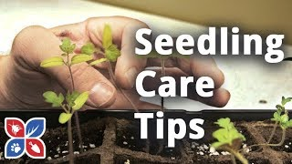 Do My Own Gardening - Do's and Don'ts of Seedling Care