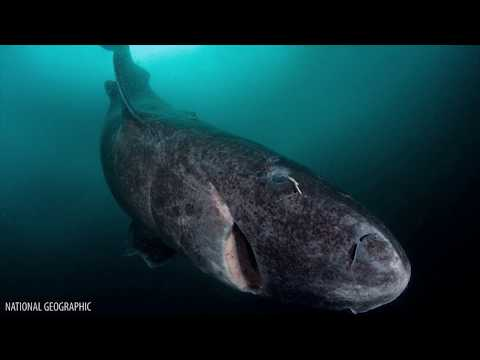 Download Youtube: 10 Amazing Discoveries In The Deep Ocean