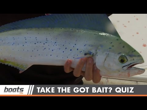 Take The Got Bait Fishing Quiz