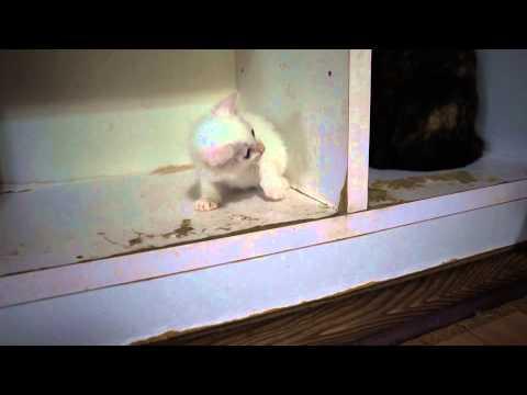 http://osanpoikuyo.blog112.fc2.com/ 離島の伊豆大島で 犬、猫、数十頭共存中☆ 福島被災犬&伊豆大島被災猫 里親さん募集中.