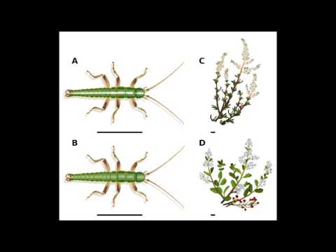 Adaptation in the wild: ecological traits - Benito's Explanations