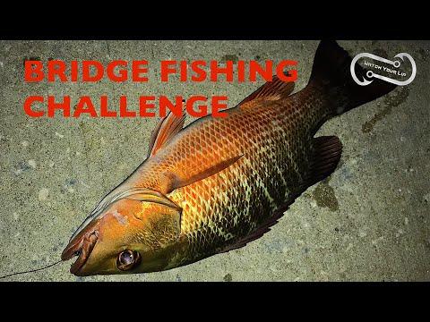Bridge Fishing Challenge Florida Keys