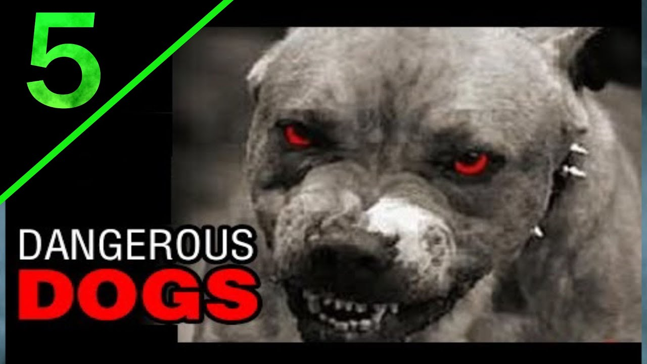 5 most dangerous dogs breeds in the world youtube - Best dogs for small spaces pict ...