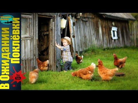 Жизнь в деревне .Домашний скот : Куры ,Козы,Кролики.Часть 1