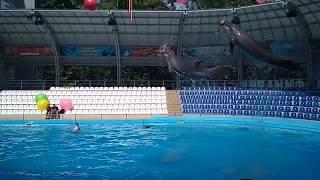 Дельфинарий Немо Харьков 2018 супер шоу дельфинов и китов
