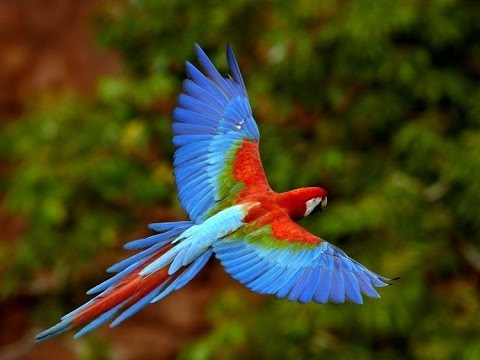 Дикая природа Амазонки HD - Как поздравить с Днем Рождения