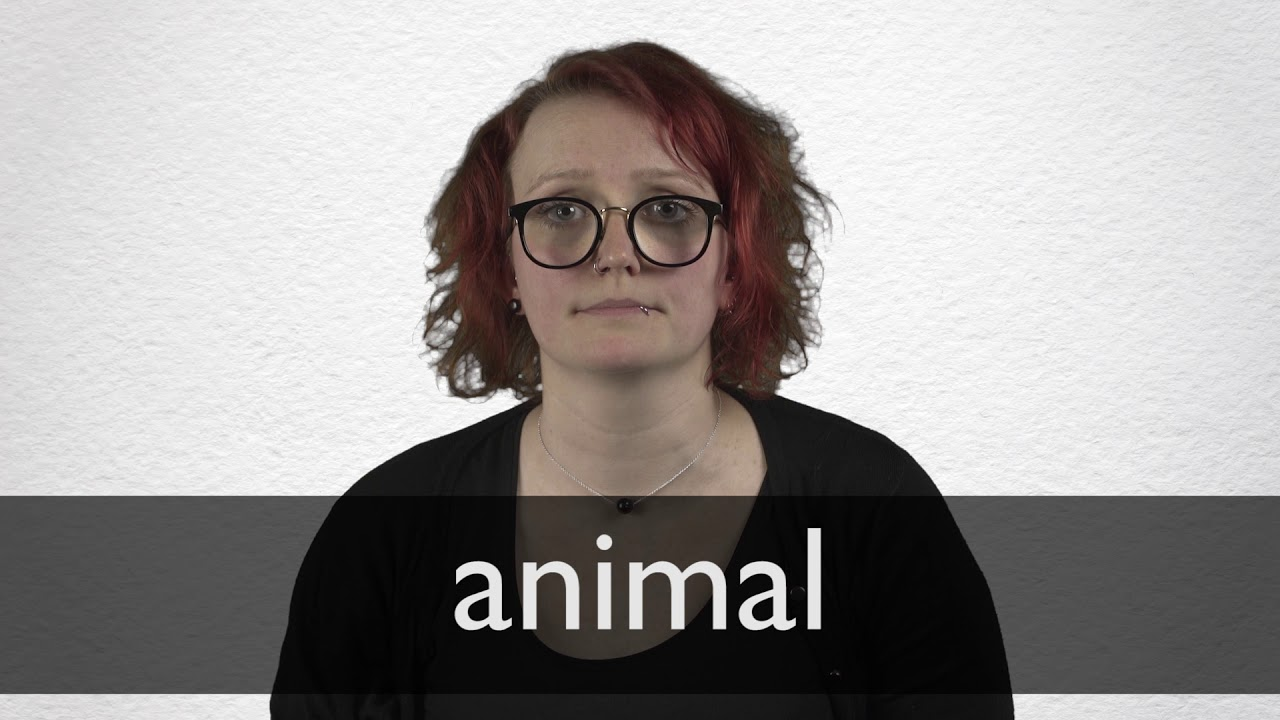 Animal definition and meaning   Collins English Dictionary
