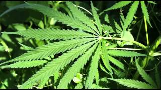 "Emotional Rap Song about Weed ""Need Me Some Weed"" Funny Freestyle Rap Song"