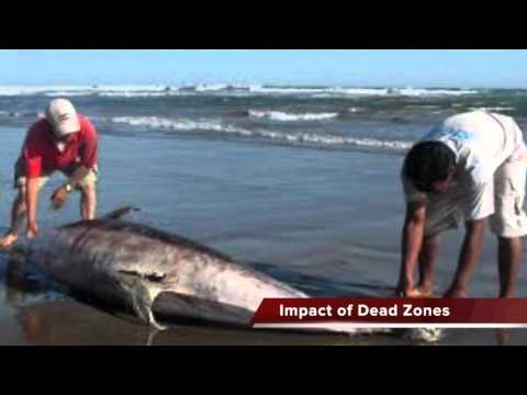 The Gulf of Mexico: Dead Zone