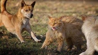 Коты против собак VL