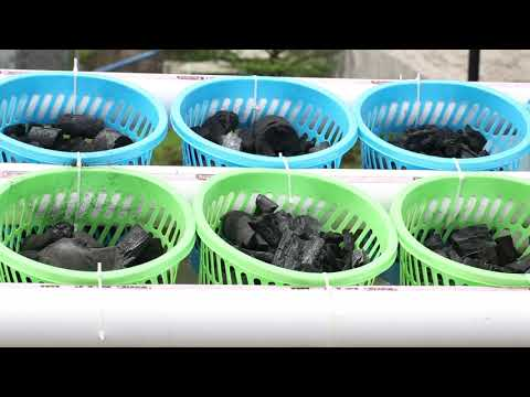 How to build a raft or floating aquaponic system