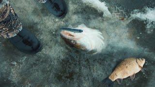 ЛОВИМ СУДАКА гоняющего ОГРОМНУЮ СТАЮ КАРАСЕЙ И САЗАНОВ Подводная съемка Рыбалка в Астрахани 4K