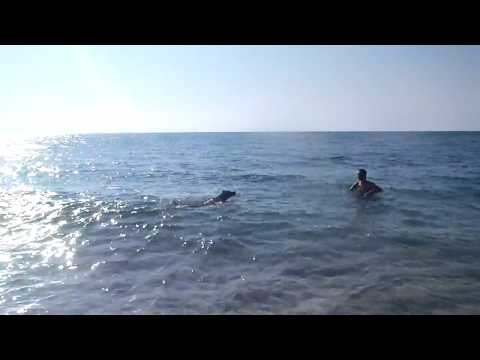 Richard Wygand and Bolt swimming