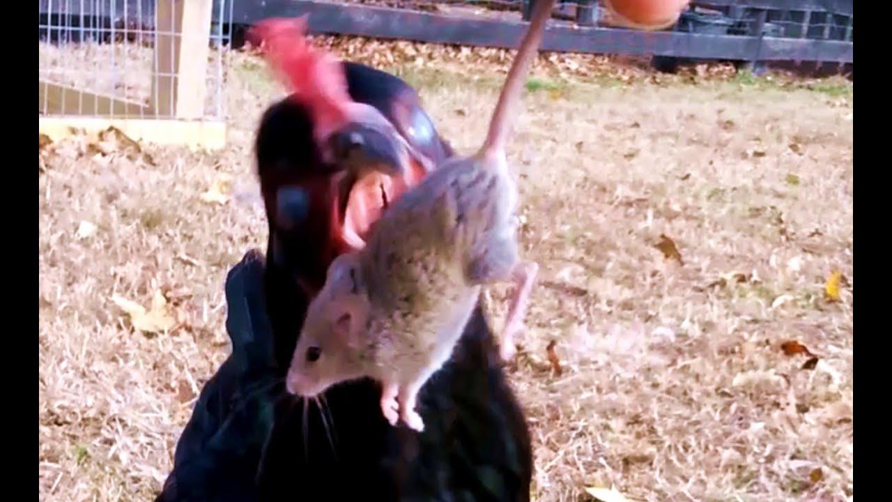 Do Mice Like Dog Food