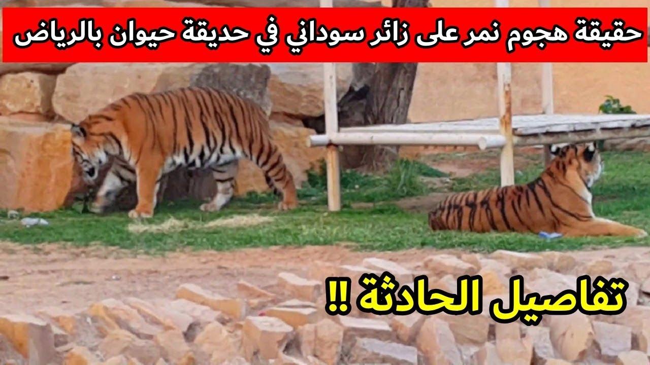 حقيقة هجوم نمر على زائر سوداني في حديقة حيوان بالرياض Youtube