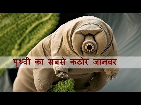 हमारे बीच घूम रहा है दूसरी दुनिया का प्राणी टार्डीग्रेड ? | Creature from another world tardigrade