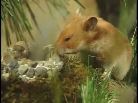 Hammy the Hamster Vol 1 Ep 1