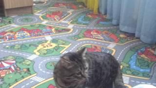 борька ищет кота который в компьютере