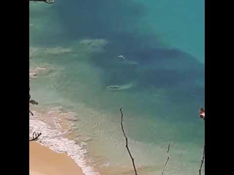 Tubarão na praia do Sancho - Fernando de Noronha