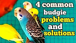 Budgies common health problem( in Hindi/ English and Urdu)