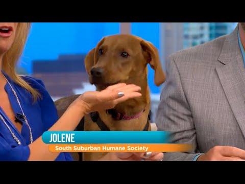 WCIU, The U | Rescue Dog: Meet Jolene!