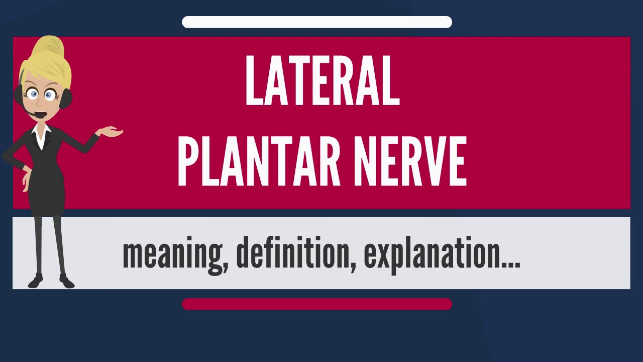 What Is Lateral Plantar Nerve What Does Lateral Plantar Nerve Mean