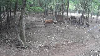 若犬の訓練 ラガー犬についてのお問い合わせ先:(株)マツダコポレーショ...