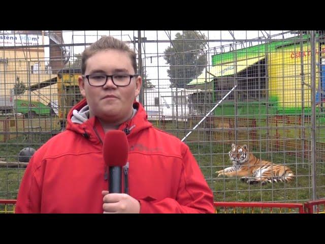 Tygři - Cirkus Jo-Joo