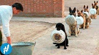ANJING Aja Bisa Antri, Masa' Kamu Enggak? Anjing Paling DISIPLIN & Terlatih Di Dunia