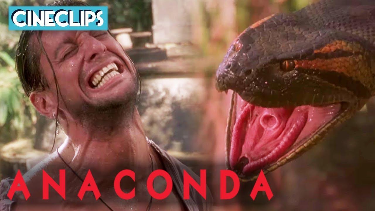 Download Mateo Is Constricted By KILLER Anaconda! | Anaconda | CineClips