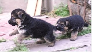 SUPER СМЕШНЫЕ ЩЕНКИ! Most funny puppies in the world! Одесса.