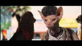 Кошачья пародия на трейлер фильма «Семь психопатов»
