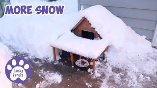 More Snow, An Empathic Cat, Mail Time * S4 E102 * Cat Videos Vlog