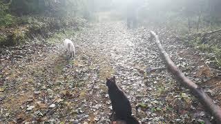 Кошки в лесу