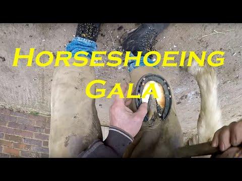 Horseshoeing Gala