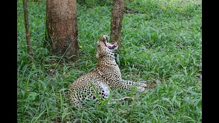 Wildlife Safari in Kenya & Tanzania 🇰🇪 🇹🇿