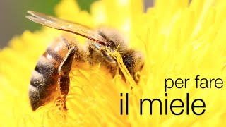 Come si fa il miele