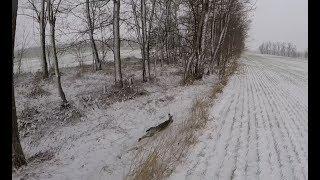 Охота на зайца. По снегу  с дратхааром