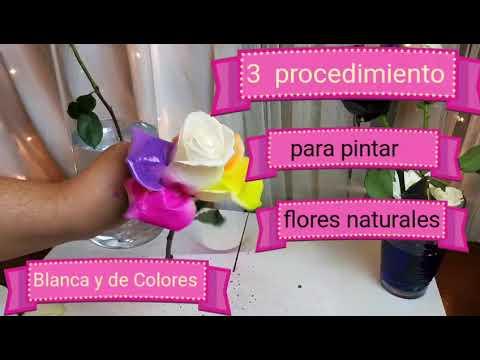 3 Maneras Para Pintar Tus Flores Naturales
