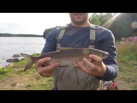 Рыбалка на сига в Северной Карелии.